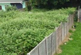 garden clearance Liverpool
